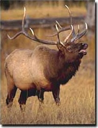 Washington elk hunting