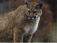 Mountain Lion Hunting Guides and Outfitters � Trips and Guided Hunts